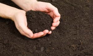 Adams Soils - 1