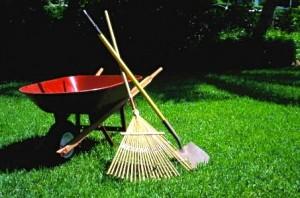 Lawn Maintenance - 1