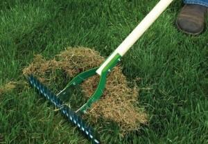 Lawn Maintenance - 3
