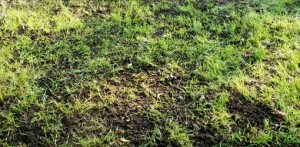 Lawn Maintenance - 4