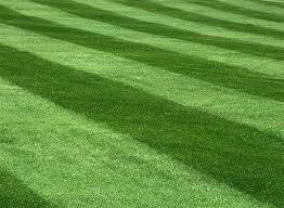 Lawn Maintenance - 5