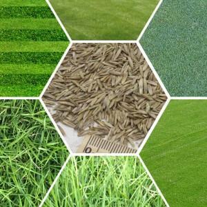 Seed Mixes - 1