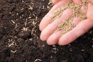 Seed Mixes - 3