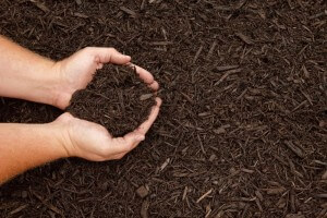 mulch in hand