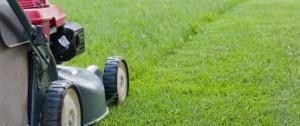 summer lawn - 1