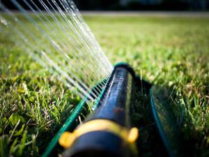 summer lawn - 2