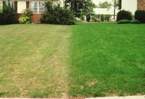summer lawn - 3
