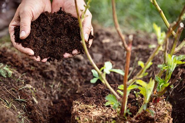 Soils & Mulches